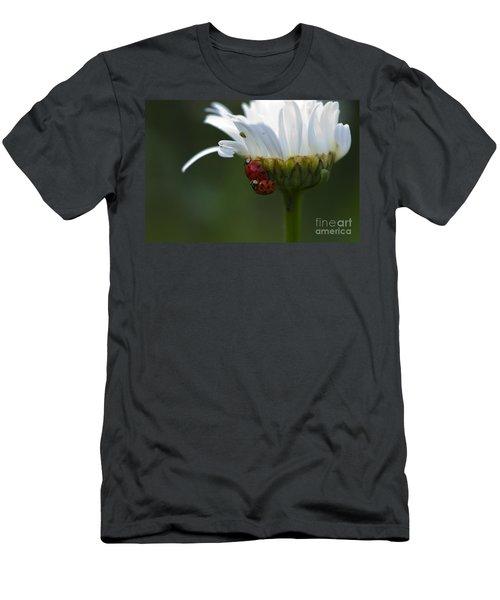 Ladybugs On Shasta Daisy Men's T-Shirt (Athletic Fit)