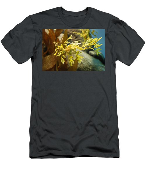 Leafy Sea Dragon Men's T-Shirt (Athletic Fit)