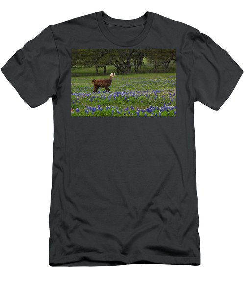 Llama In Bluebonnets Men's T-Shirt (Athletic Fit)