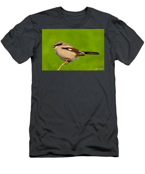 Loggerhead Shrike Men's T-Shirt (Athletic Fit)
