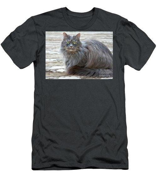 Long Haired Gray Cat Art Prints Men's T-Shirt (Athletic Fit)