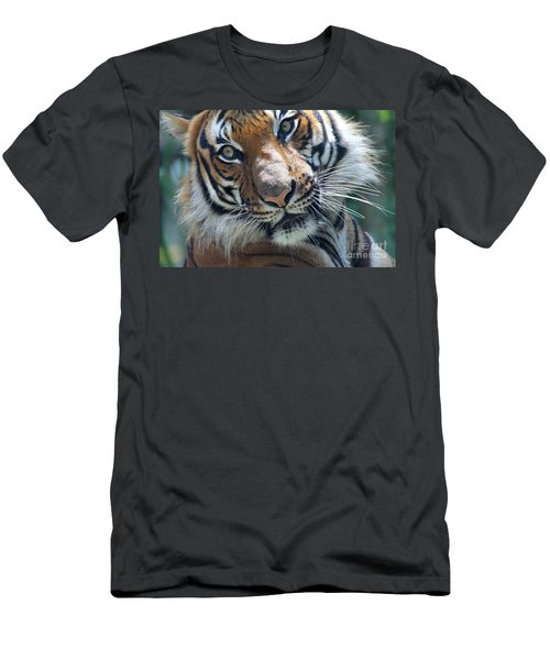 Malayan Tiger Men's T-Shirt (Athletic Fit)