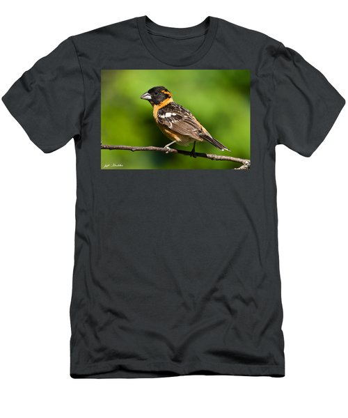 Male Black Headed Grosbeak In A Tree Men's T-Shirt (Athletic Fit)