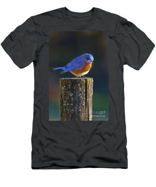 Male Bluebird Men's T-Shirt (Athletic Fit)