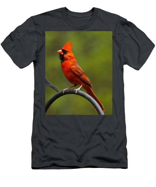 Male Cardinal Men's T-Shirt (Athletic Fit)