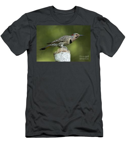 Male Northern Flicker Men's T-Shirt (Athletic Fit)