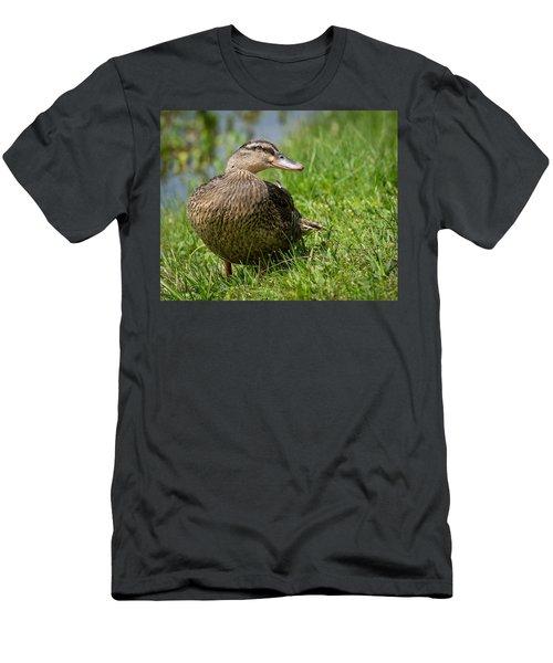 Mallard Men's T-Shirt (Athletic Fit)