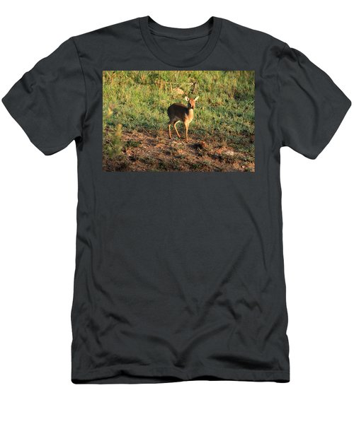 Masai Mara Dikdik Deer Men's T-Shirt (Athletic Fit)