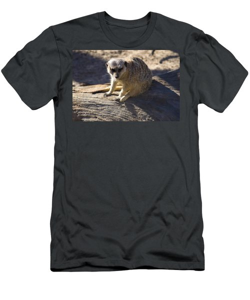 Meerkat Resting On A Rock Men's T-Shirt (Slim Fit) by Chris Flees