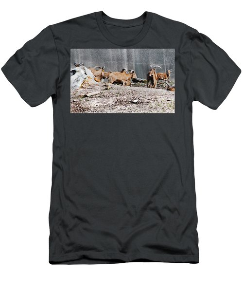 Meeting Of Barbary Sheep Men's T-Shirt (Athletic Fit)