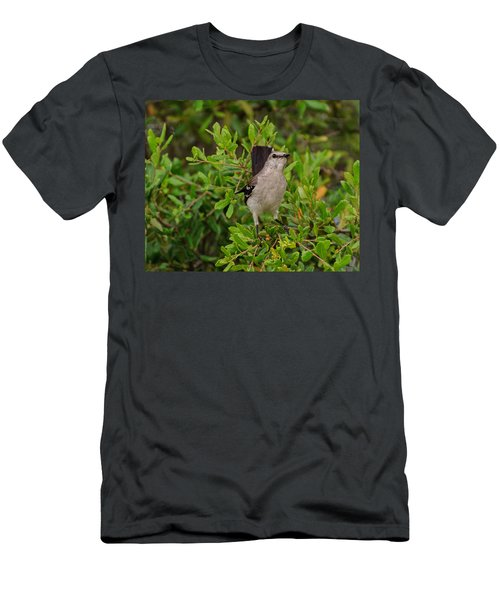 Mockingbird In Tree Men's T-Shirt (Athletic Fit)