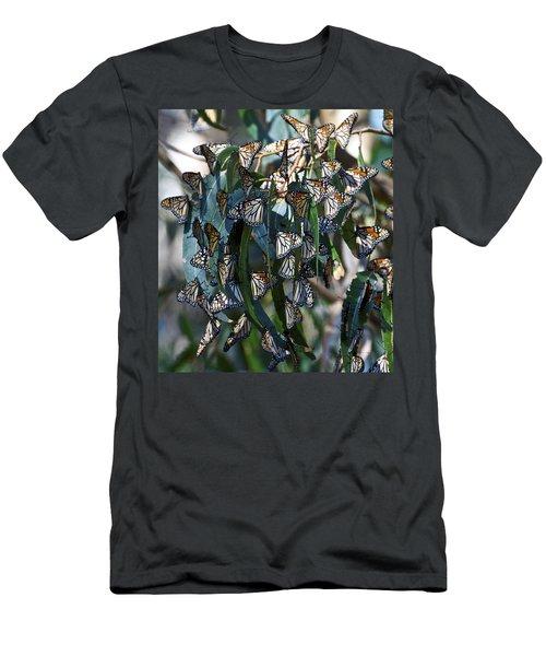 Monarch Butterflies Natural Bridges Men's T-Shirt (Athletic Fit)