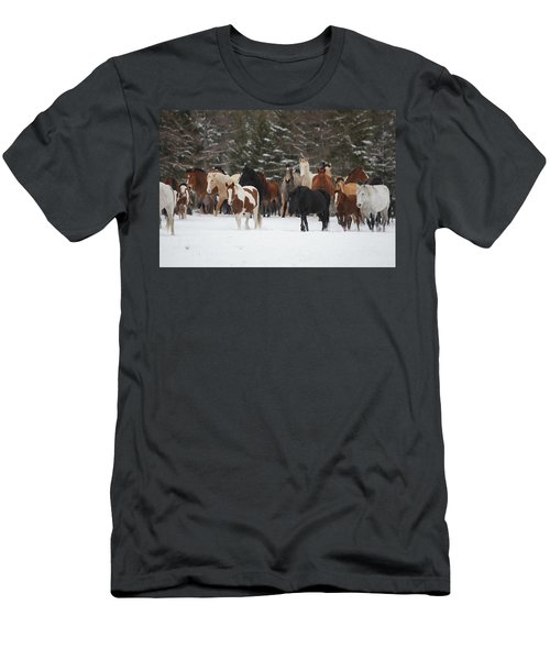 Montana Herd Men's T-Shirt (Slim Fit) by Diane Bohna