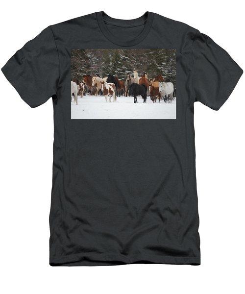 Montana Herd Men's T-Shirt (Athletic Fit)