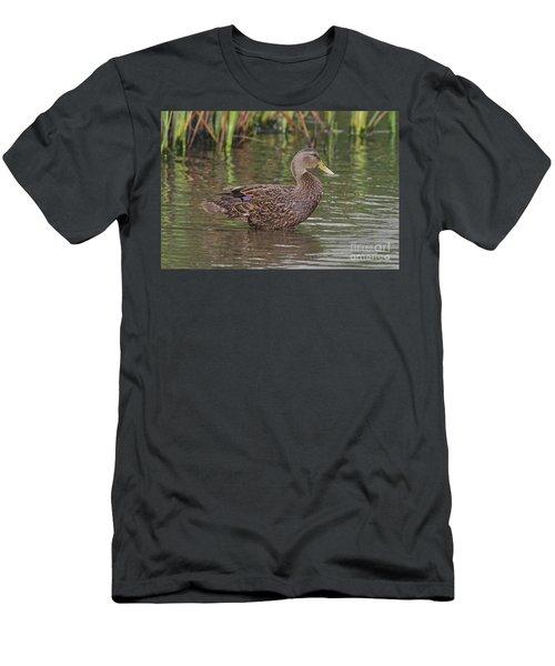 Mottled Duck Drake Men's T-Shirt (Athletic Fit)