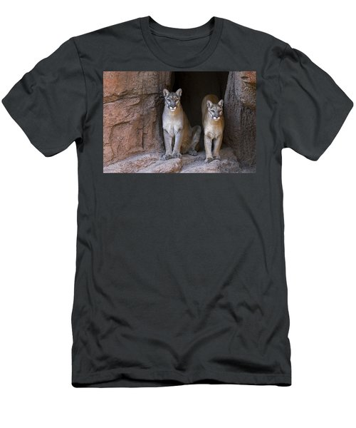 Men's T-Shirt (Slim Fit) featuring the photograph Mountain Lion 2 by Arterra Picture Library