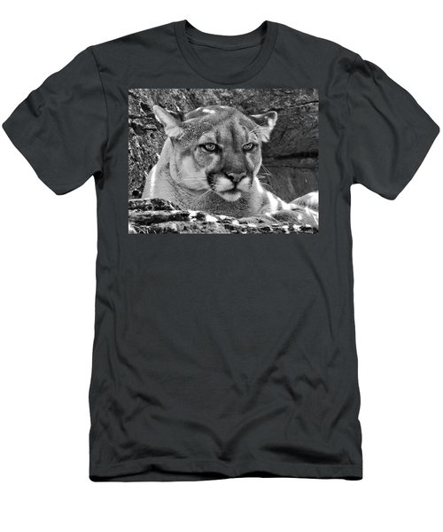 Mountain Lion Bergen County Zoo Men's T-Shirt (Athletic Fit)