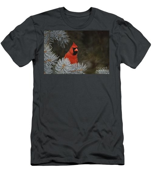 Northern Cardinal In Spruce Tree Men's T-Shirt (Athletic Fit)