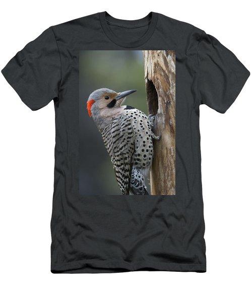 Northern Flicker At Nest Cavity Alaska Men's T-Shirt (Athletic Fit)