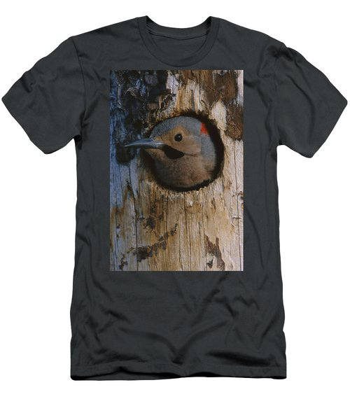 Northern Flicker In Nest Cavity Alaska Men's T-Shirt (Athletic Fit)