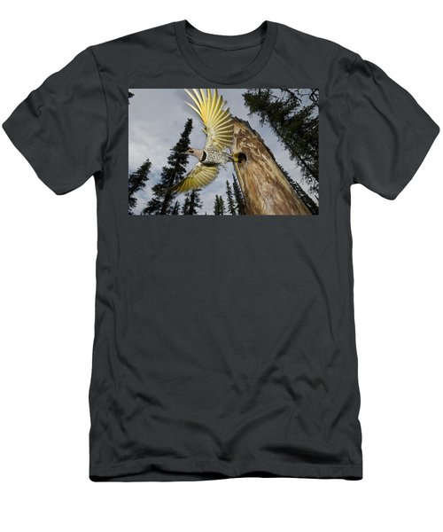 Northern Flicker Leaving Nest Cavity Men's T-Shirt (Athletic Fit)