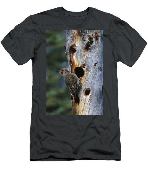 Northern Flicker Near Nest Cavity Alaska Men's T-Shirt (Athletic Fit)