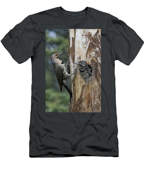 Northern Flicker Parent At Nest Cavity Men's T-Shirt (Athletic Fit)