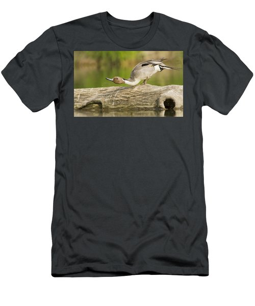 Northern Pintail  Men's T-Shirt (Athletic Fit)