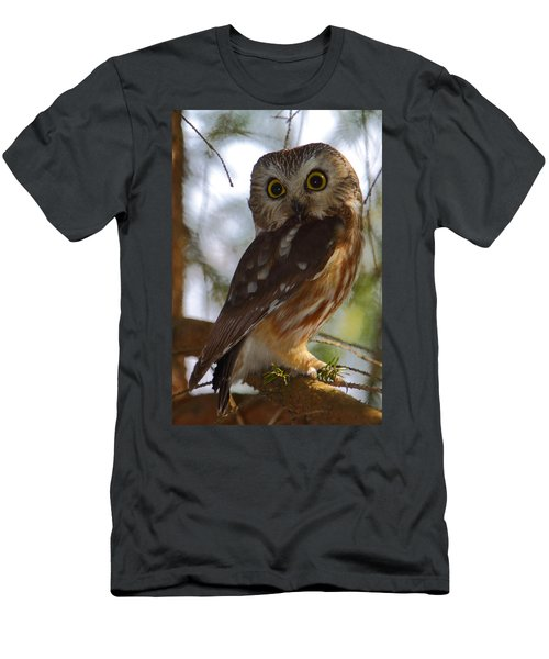 Northern Saw-whet Owl II Men's T-Shirt (Athletic Fit)