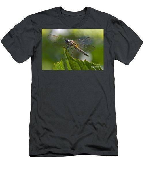 Odonata Men's T-Shirt (Athletic Fit)