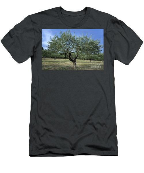 Olive Tree Men's T-Shirt (Athletic Fit)
