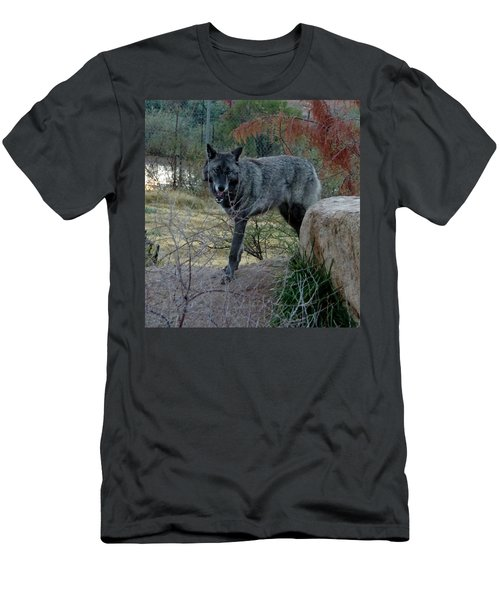 Out Of Africa Black Wolf Men's T-Shirt (Athletic Fit)