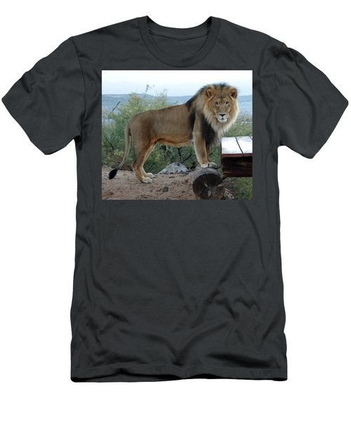 Out Of Africa  Lion 1 Men's T-Shirt (Athletic Fit)