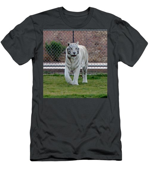 Out Of Africa White Tiger Men's T-Shirt (Athletic Fit)