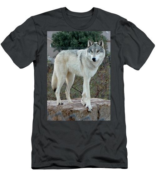 Out Of Africa Wolf  Men's T-Shirt (Athletic Fit)