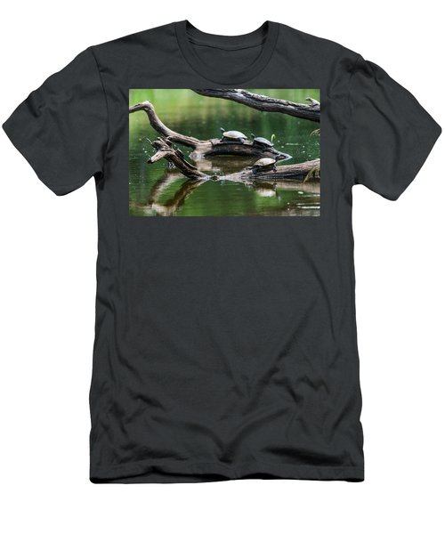 Painted Turtles  Chrysemys Picta Men's T-Shirt (Athletic Fit)