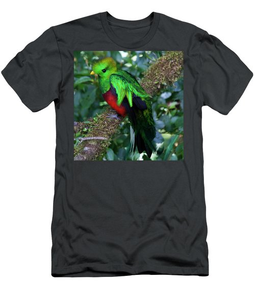 Quetzal Men's T-Shirt (Athletic Fit)