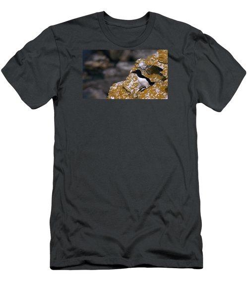 Razorbill Bird Men's T-Shirt (Slim Fit) by Dreamland Media