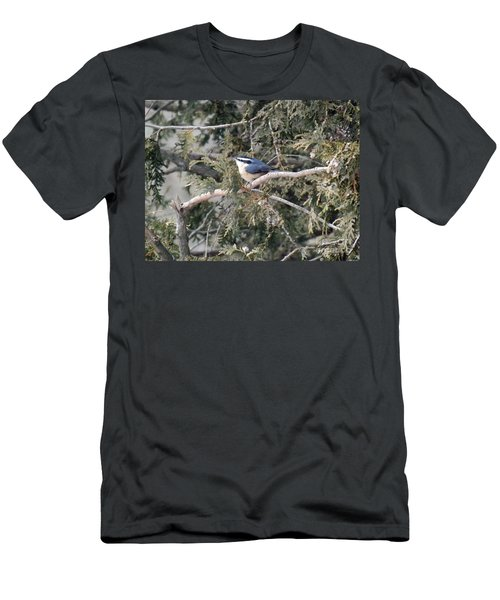Men's T-Shirt (Slim Fit) featuring the photograph Red Breasted Nuthatch by Brenda Brown