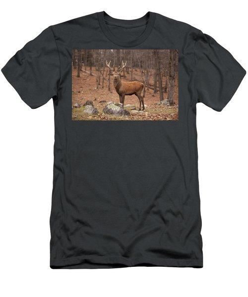 Red Deer Men's T-Shirt (Slim Fit) by Eunice Gibb