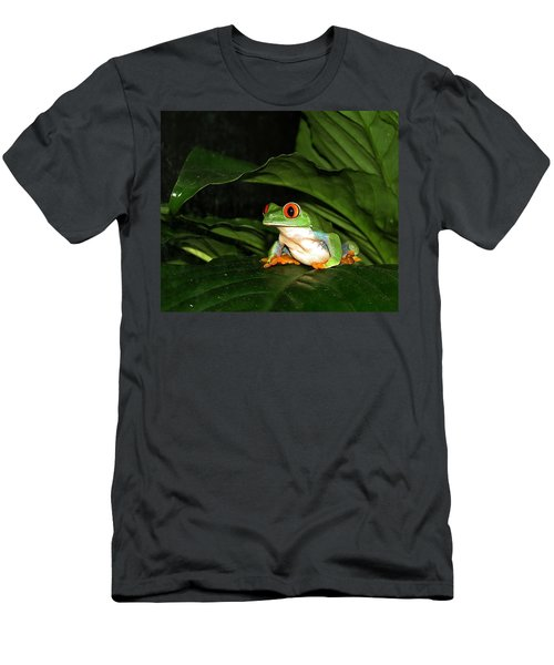 Red Eyed Green Tree Frog Men's T-Shirt (Athletic Fit)