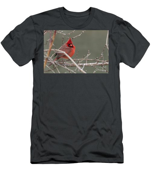Red In Winter Men's T-Shirt (Athletic Fit)