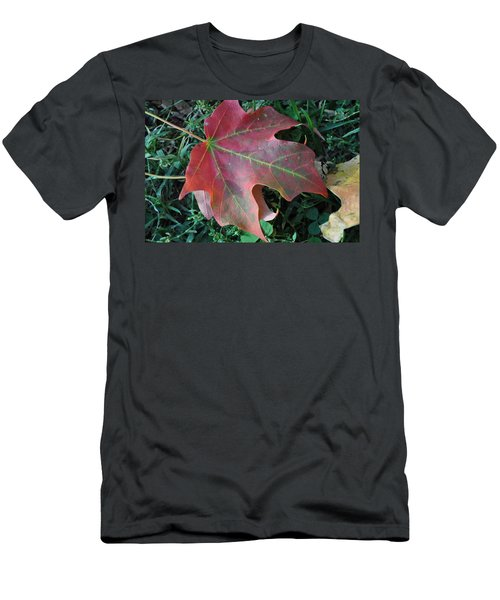 Red Leaf Men's T-Shirt (Athletic Fit)