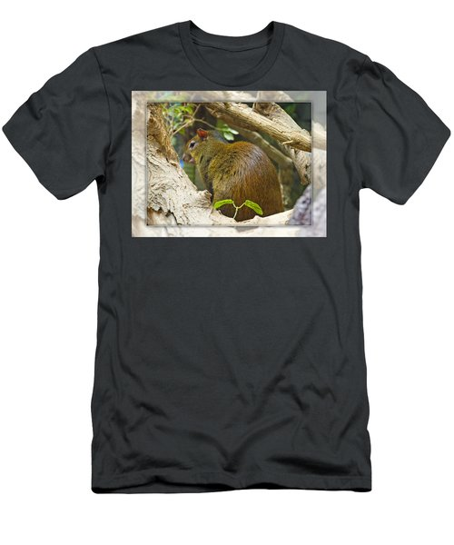 Red-rumped Agouti Men's T-Shirt (Athletic Fit)