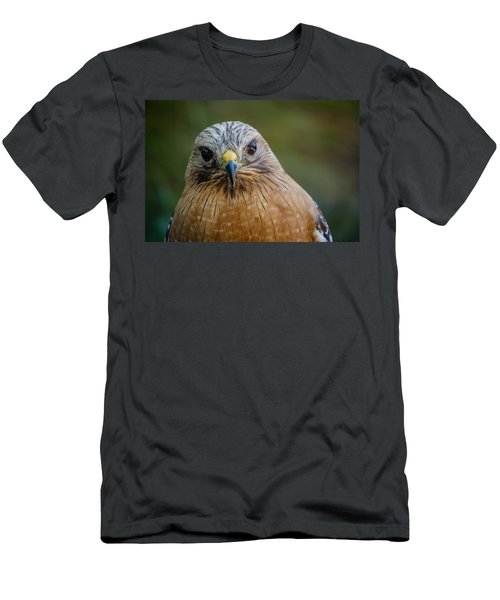 Red Shouldered Hawk Men's T-Shirt (Athletic Fit)