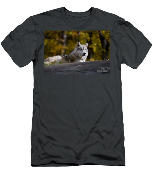 Men's T-Shirt (Slim Fit) featuring the photograph Resting Arctic Wolf On Rocks by Wolves Only