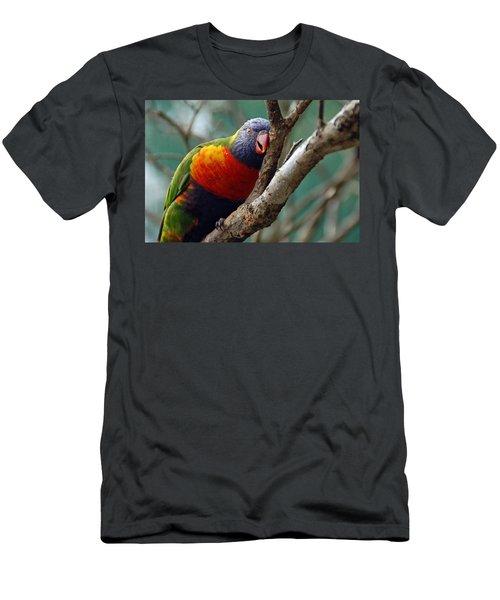 Resting Lorikeet Men's T-Shirt (Athletic Fit)