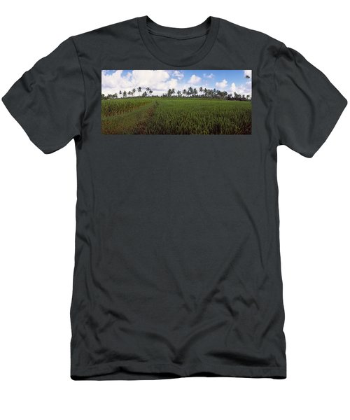 Rice Field, Bali, Indonesia Men's T-Shirt (Athletic Fit)