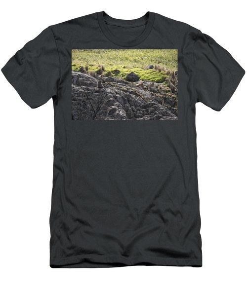 Seal - Montague Island - Austrlalia Men's T-Shirt (Athletic Fit)