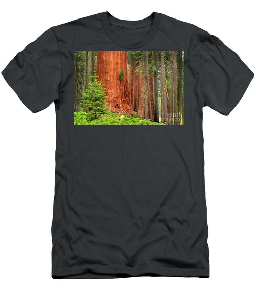 Sequoias Men's T-Shirt (Athletic Fit)
